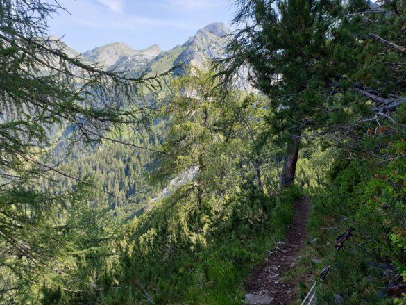 Stezka lesem